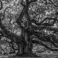 Angel Oak Tree Americana by Dale Powell