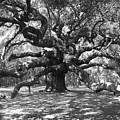 Angel Oak Tree Black And White by Melanie Snipes