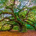 Angel Oak Tree Charleston Sc by John McGraw