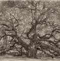 Angel Oak Tree by Darlene Freas