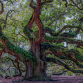 Angel Oak Tree Deeply Rooted History by Dale Powell
