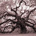 Angel Oak Tree by Dustin K Ryan