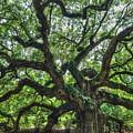 Angel Oak Tree by Ronald Kotinsky