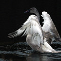 Angel Wings 2 by Sharon Talson
