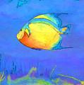 Angelfish by Arline Wagner