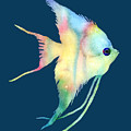 Angelfish I - Solid Background by Hailey E Herrera