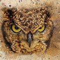 Angry Bird by Eva Lechner