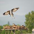 Angry Bird by Loree Johnson