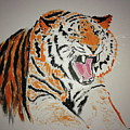 Angry Tiger by Jack Bunds