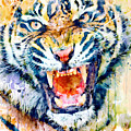 Angry Tiger Watercolor Close-up by Marian Voicu