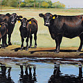 Angus Reflections by Toni Grote