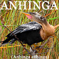 Anhinga The Swimming Bird by David Lee Thompson