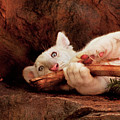Animal - Cat - My Chew Toy by Mike Savad