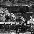 Animal Tamer, 1930s by Granger