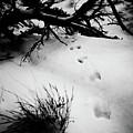 Animal Tracks by Brenton Woodruff