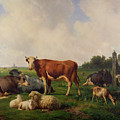 Animals Grazing In A Meadow  by Hendrikus van de Sende Baachyssun