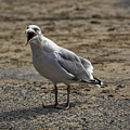 Animated Seagull by Philip Pound