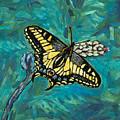 Anise Swallowtail by Steve Lawton