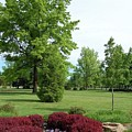 Ann Morrison Park by Tanya Mutton