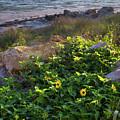 Anna Maria Island, Florida #30134-35 by John Bald