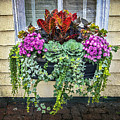 Annapolis Flower Box by Brian Wallace