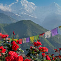 Annapurnas And Prayer Flags by Sonal Dave