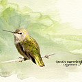 Anna's Hummingbird - Female by Beve Brown-Clark Photography