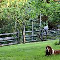 Annie In Her Yard by Karen Adams