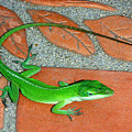 Anole On Chair Tiles by Lucyna A M Green