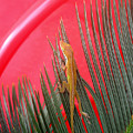 Anole With Palm - In The Red by Lucyna A M Green