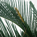 Anole With Palm - Looking Up by Lucyna A M Green