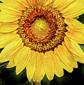 Another Artistic Sunflower by Don Johnson