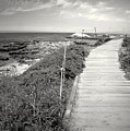 Another Asilomar Beach Boardwalk Black And White by Joyce Dickens