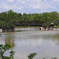 Another Bridge At The Zen Garden by Stacey Marshall