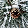 Another Frosty Pine Cone by RiaL Treasures