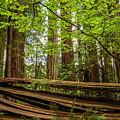 Another Split Redwood by George Herbert