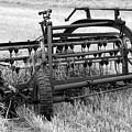 Rake The Hay by Kathleen Struckle