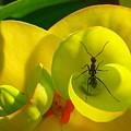 Ant by Ajith Vijayan