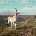 Antelope by Albert Bierstadt