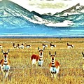 Antelope At Attention by Mandy Anderson