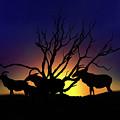 Antelope Crossing by Gravityx9 Designs