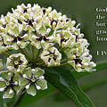 Antelope Horns Wildflower With Scripture by Linda Phelps
