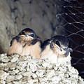 Antelope Island Birds by Linda Dunn