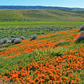 Antelope Valley Poppy Reserve by Kyle Hanson