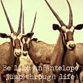 Antelopes by Zena Zero