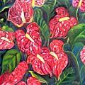 Anthurium Flowers by Caroline Street