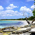 Antigua Shoreline by Arvin Miner
