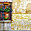 Antigua Window by Derek Selander