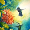 Antillean Crested Hummingbirds And Ixora by Christopher Cox