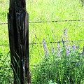 Antique Fence Post by Will Borden